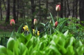 spring 4-12