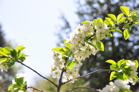 spring 5-19
